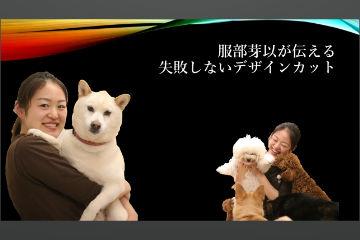 トリミング・ペットホテル・犬の保育園|DOG DIAMOND|ドッグ